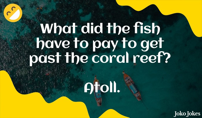 Coral joke, What do coral get stressed about?