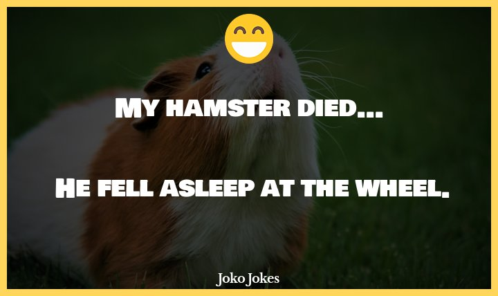Hamster joke, I bought my dog a new toy...