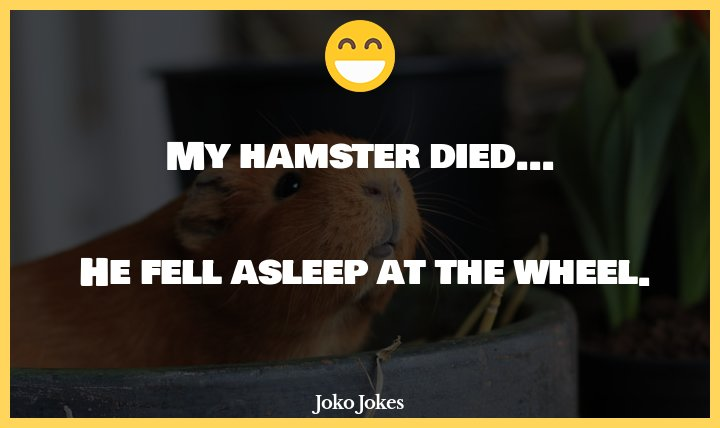 Hamsters joke, I just found out that hamsters blink one eye at a time.
