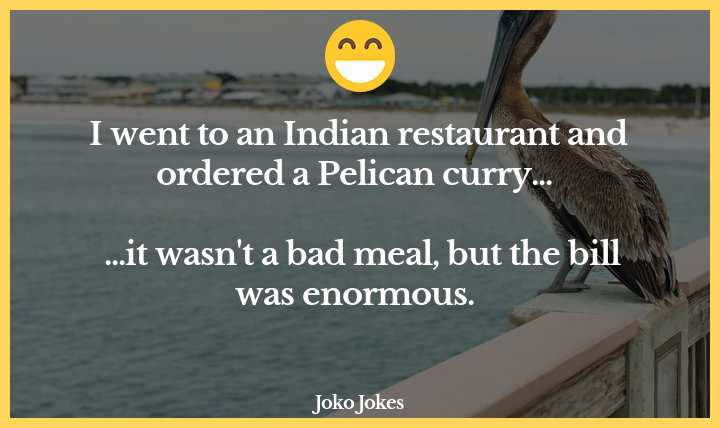 20+ Pelican Jokes To Laugh Out Loud